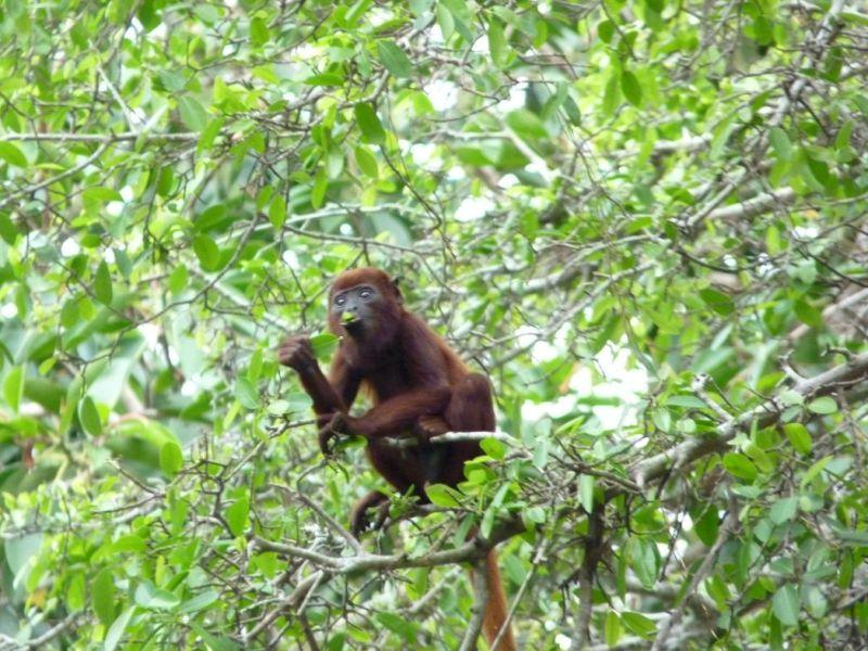 La Ronda del Sinú es uno de los parques lineales más largos del mundo. Ubicado en Montería, Córdoba, a la orilla derecha del río Sinú. En sus instalaciones se puede encontrar diversos animales silvestres como iguanas, osos perezosos y diversas especies de micos, así como la flora de bosque seco tropical propia de la región. [http://es.wikipedia.org/wiki/Ronda_del_Sin%C3%BA]